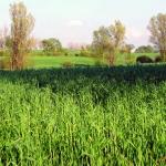 Relazioni_agronomiche