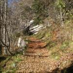 Relazioni_forestali