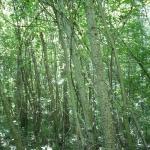 rilievi_forestali