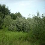 Rilievi_vegetazionali